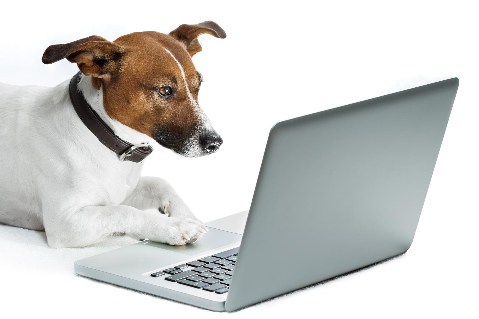 bigstock-Dog-Computer-33478682